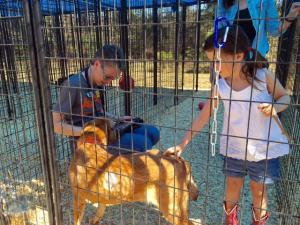 Hundreds of people visited a Sanford warehouse on March 18, 2016, for the first day of an ASPCA pet adoption marathon. The organization seized more than 600 animals from an unlicensed shelter in Hoke County several weeks earlier.