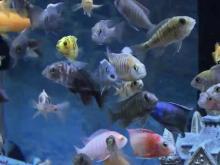 High school project bubbles into aquarium shop
