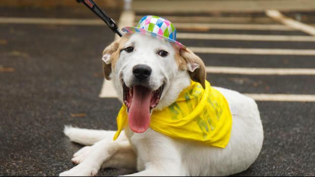 People, pups walk SPCA K9-3k to benefit homeless animals