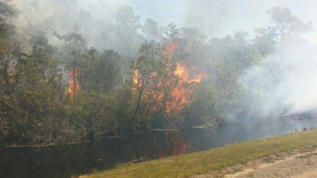 A large forest fire in Hyde County has grown to nearly 10,000 acres and has forced authorities to shut down U.S. Highway 264 near the Dare County line. (Photos from US Fish and Wildlife)