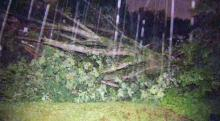 IMAGES: Fallen tree knocks out power to Raleigh neighborhood
