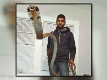 Man bitten by king cobra in Orange County home