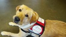 IMAGES: Service animal fraud a growing concern across North Carolina