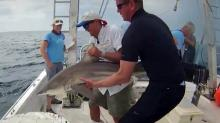 UNC shark research