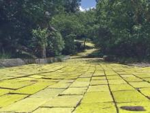 Visitors again follow yellow brick road to Land of Oz