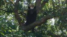 IMAGES: Bear in tree becomes main attraction in Hope Mills neighborhood