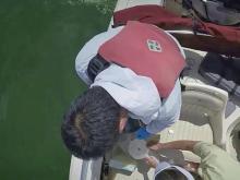 Large algae blooms cases danger in the Pamlico River