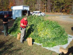 An Asherboro man was arrested on Tuesday in Moore County after authorities found more than $2 million worth of marijuana growing at a residence. (Photo courtesy of the Moore County Sheriff's Department)