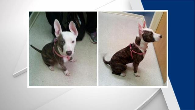 Police are asking for the public's help locating a puppy that was stolen in November from a vehicle in a Durham parking lot.