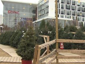 A robber or robbers stole cash from two TROSA Christmas tree lots in Durham and tried to rob a third, police said.