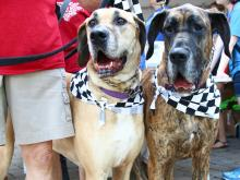 K-9 3k walk benefits Wake County SPCA