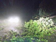 RAW: Downed trees block Sampson road