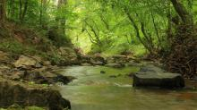 Eno River Association acquires, plans to preserve 56 acres in Orange County