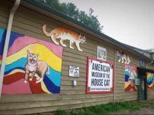 American Museum of the House cat draws cat lovers to Sylva