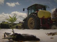 Hemp farming in Person County