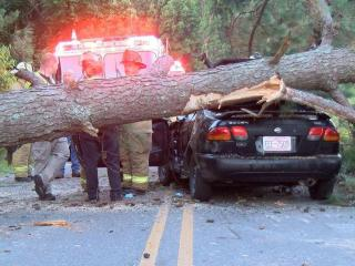 Driver trapped in car by fallen pine tree in Johnston County
