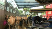 Heat wave puts SC carriage horses in park