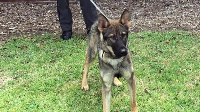 Clayton Police Department announces name of new police dog