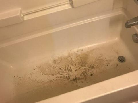 Students met with bugs, mildew in 'move-in ready' Raleigh apartments