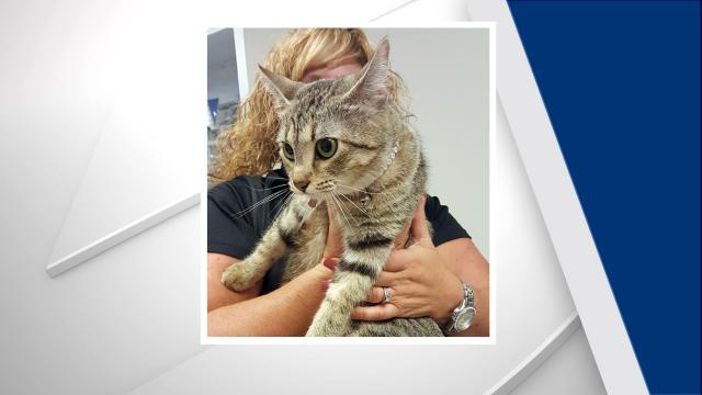 Mechanics at Leith Honda in Raleigh found a cat in the engine compartment of an SUV on Sept. 12, 2017.