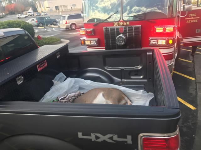 A deer in the back of a truck after being removed Wednesday from inside Northgate Mall.<br/>Reporter: Emmy Victor