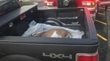 IMAGES: Wildlife commission: Deer removed from Northgate Mall will be euthanized