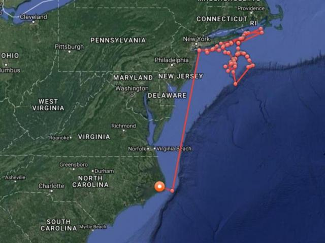 Young Great White Shark Lurking Near Outer Banks Wral Com