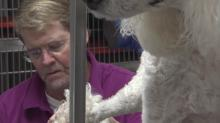 IMAGE: Triangle residents to preside over NY's elite Westminster Dog Show
