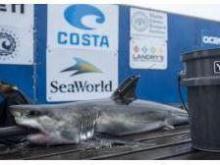 PETA complaint about shark pic spurs probe of Broncos\' player Von ...