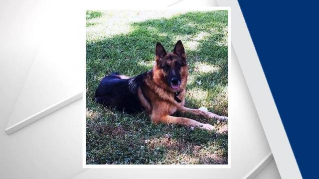 Officers with the Durham Police Department shared on Monday a photo of their beloved K9 member, Fife, who passed away on Saturday after eight years of service. Credit: DPD