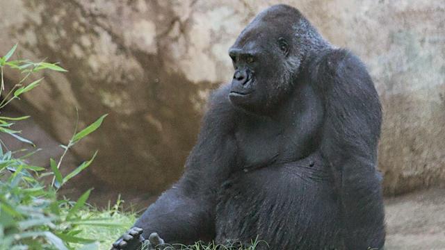 Credit: North Carolina Zoo