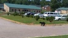 IMAGE: Bear sightings reported in Wake Forest area