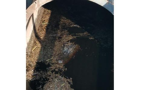 Hyde County Alligator in water pump. Photo from Hyde County