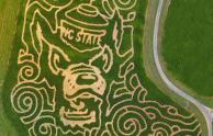 IMAGE: Granville Haunt Farm now features an N.C. State themed corn maze