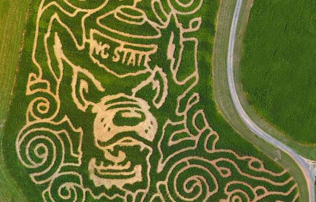 The Granville Corn Maze announced a wolf pack themed maze.<br/>Web Editor: Yesenia Jones