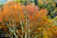 IMAGES: Fall colors near peak at Grandfather Mountain