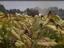 Farmers struggle but are thankful after Hurricane Florence