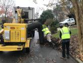 IMAGES: Tons of leaves, thousands of steps for Cary's leaf sweep crews