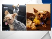 Police searching for support dogs stolen from Durham home
