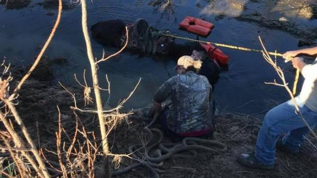 Horse rescued from Cumberland County creek. Shared with permission from 4Hooves.