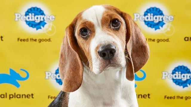 A Caswell County stray will appear in Animal Planet's Puppy Bowl XV. Photo credit: Animal Planet