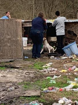 Man charged after 3 dead dogs found, 10 seized