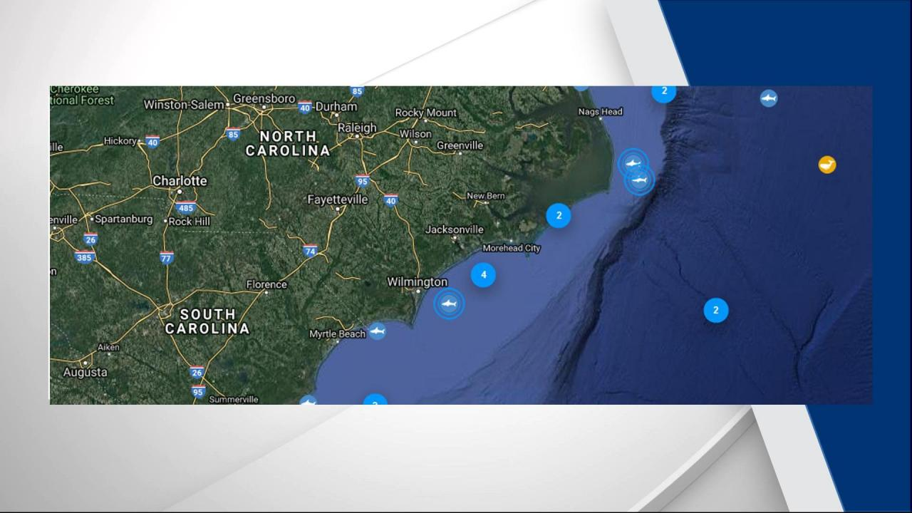 Tracker App Shows 3 Great White Sharks Off Nc Coast Wral Com