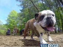 Raleigh to add four dog parks