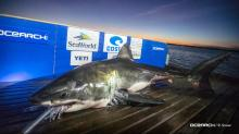 IMAGES: 15-foot great white shark pings off SC coast