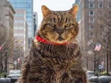 Raleigh's famous angry cat has 8,000 Instagram followers