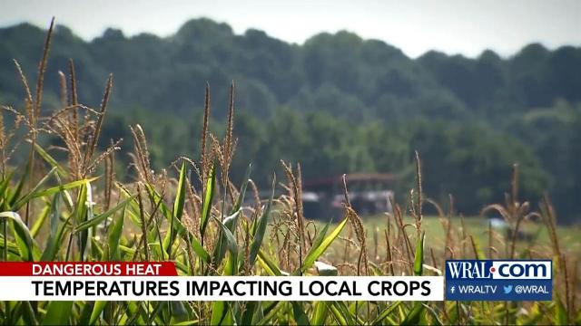 Farmers dealing with warm temps at night, too