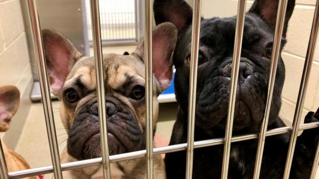 Vet Describes Conditions At Chapel Hill Dog Breeding