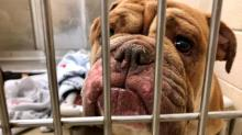 IMAGES: Vet describes conditions at Chapel Hill dog-breeding operation at center of animal cruelty case