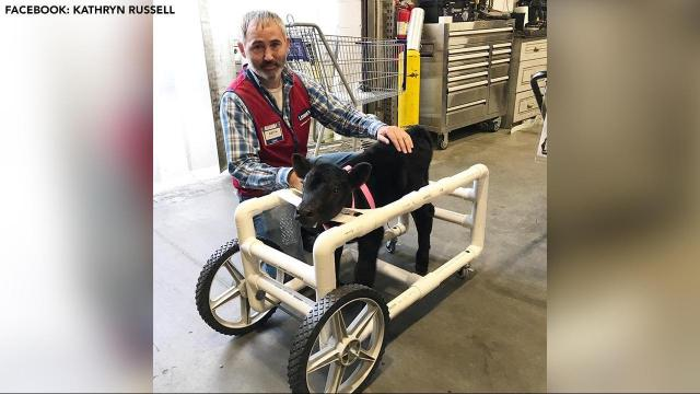 Lowe's employee in Monroe builds wheelchair for injured calf
